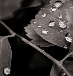 2014-06-11_Water_Drops_20