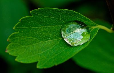 2014-06-11_Water_Drops_23