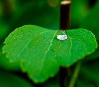 2014-06-11_Water_Drops_15