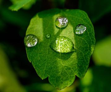 2014-06-11_Water_Drops_24