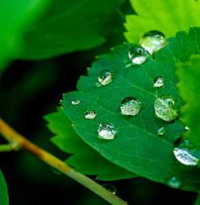 2014-06-11_Water_Drops_19