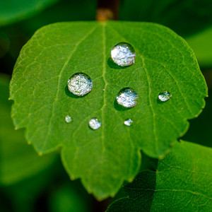 2014-06-11_Water_Drops_16