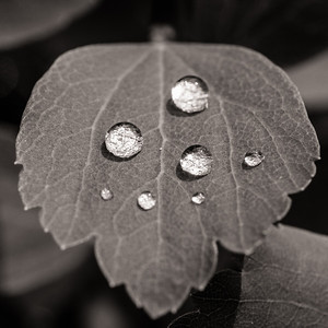 2014-06-11_Water_Drops_17