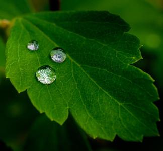 2014-06-11_Water_Drops_27