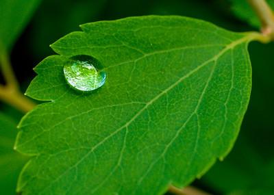 2014-06-11_Water_Drops_22