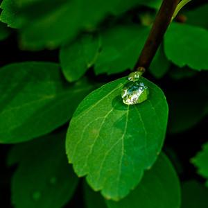 2014-06-11_Water_Drops_18