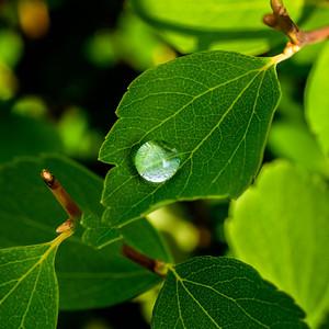 2014-06-11_Water_Drops_08