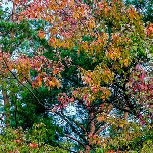 2014-10-07_Pomona_Park_01