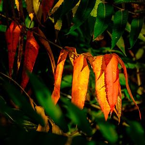 2014-10-07_Pomona_Park_10