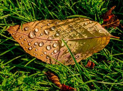 2014-10-07_Pomona_Park_37