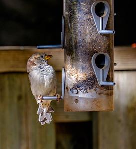 2014-10-11_Birds_23