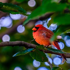 2014-10-11_Birds_11