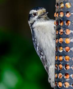 2014-10-11_Birds_13