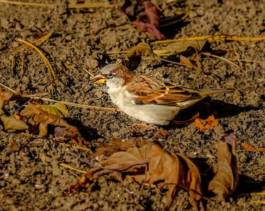 2014-10-11_Birds_21