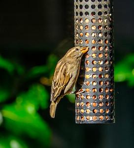 2014-10-11_Birds_24