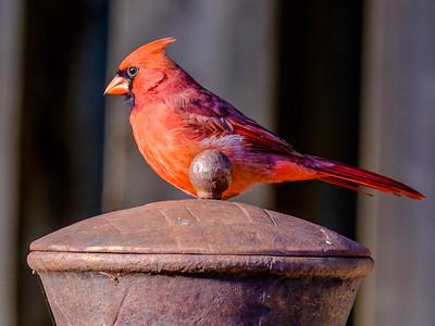 2014-10-11_Birds_30