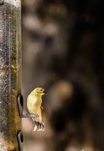 2014-10-11_Birds_33