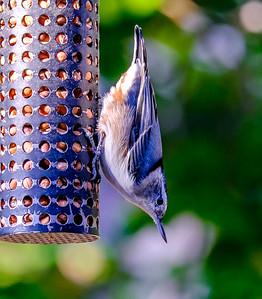 2014-10-11_Birds_28