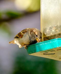 2014-10-11_Birds_20