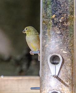2014-10-11_Birds_19