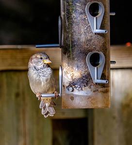 2014-10-11_Birds_22