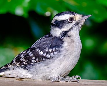 2014-10-11_Birds_12