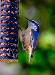 2014-10-11_Birds_32