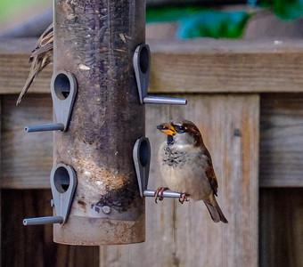 2014-10-11_Birds_10