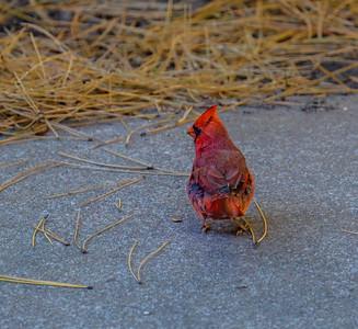 2014-10-11_Birds_25