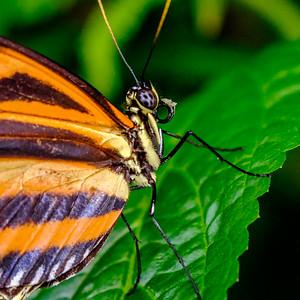 2014-10-30_Niagara_1_Butterflies_18
