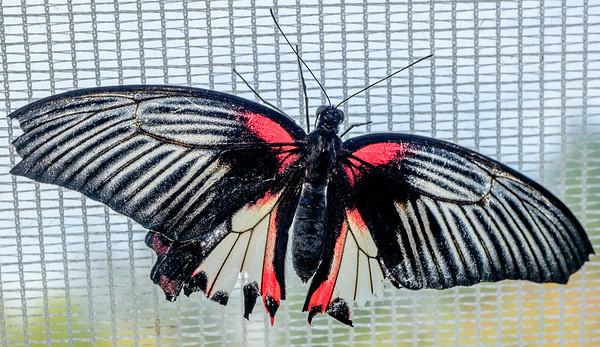 2014-10-30_Niagara_1_Butterflies_06