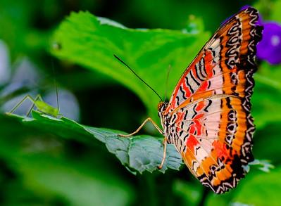 2014-10-30_Niagara_1_Butterflies_24