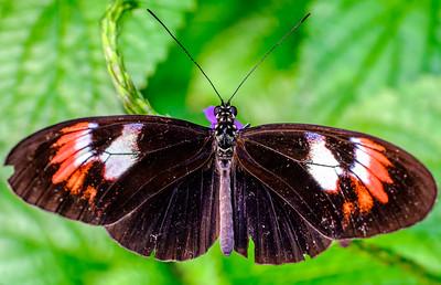 2014-10-30_Niagara_1_Butterflies_08