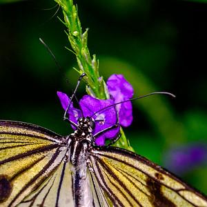 2014-10-30_Niagara_1_Butterflies_19