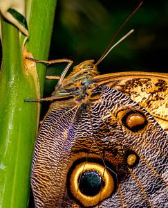 2014-10-30_Niagara_1_Butterflies_26