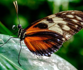 2014-10-30_Niagara_1_Butterflies_14