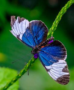 2014-10-30_Niagara_1_Butterflies_22