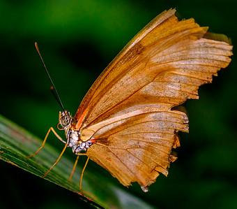 2014-10-30_Niagara_1_Butterflies_16