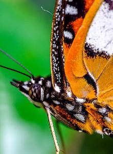 2014-10-30_Niagara_1_Butterflies_04