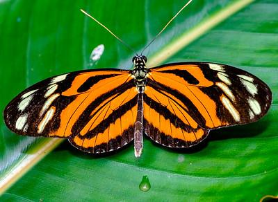 2014-10-30_Niagara_1_Butterflies_01
