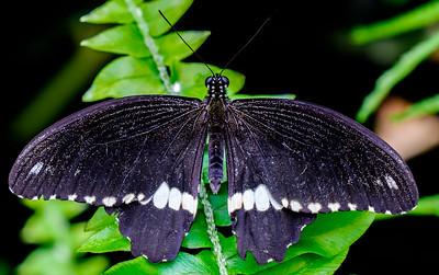 2014-10-30_Niagara_1_Butterflies_25