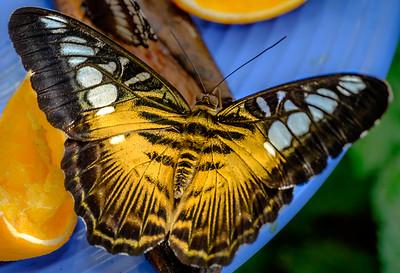 2014-10-30_Niagara_1_Butterflies_07