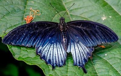 2014-10-30_Niagara_1_Butterflies_15