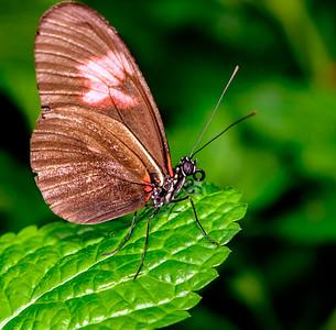 2014-10-30_Niagara_1_Butterflies_21