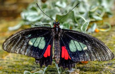 2014-10-30_Niagara_1_Butterflies_12
