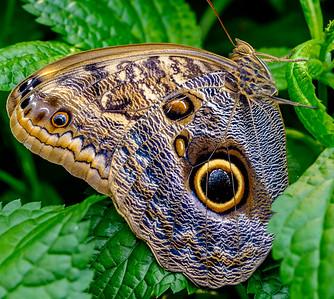 2014-10-30_Niagara_1_Butterflies_05
