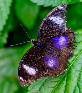 2014-10-30_Niagara_1_Butterflies_11