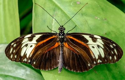 2014-10-30_Niagara_1_Butterflies_10