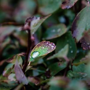 2015-10-01_Water_Drops_05