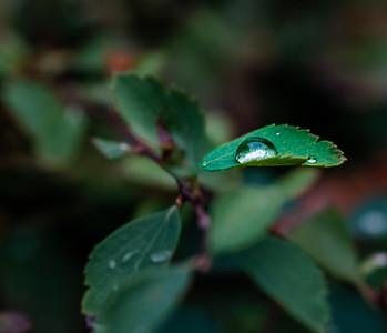 2015-10-01_Water_Drops_10